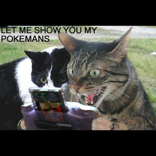 Let+Me+Show+You+My+Pokemans+pokemanscover